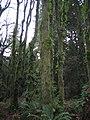 Forest pacific spirit.jpg