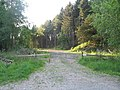 Forest track at Penrhos - geograph.org.uk - 1328181.jpg