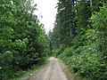 Forestry road - geograph.org.uk - 489952.jpg