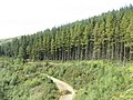 Forestry road - geograph.org.uk - 536702.jpg