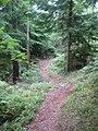 Forrest - panoramio (1).jpg