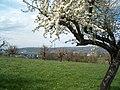 Frühling in Pratteln - panoramio.jpg