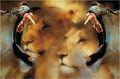 Framed lions.jpg
