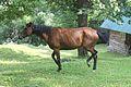 Free-roaming horse.jpg