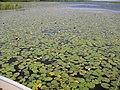 French Lake New Brunswick (8457162113).jpg