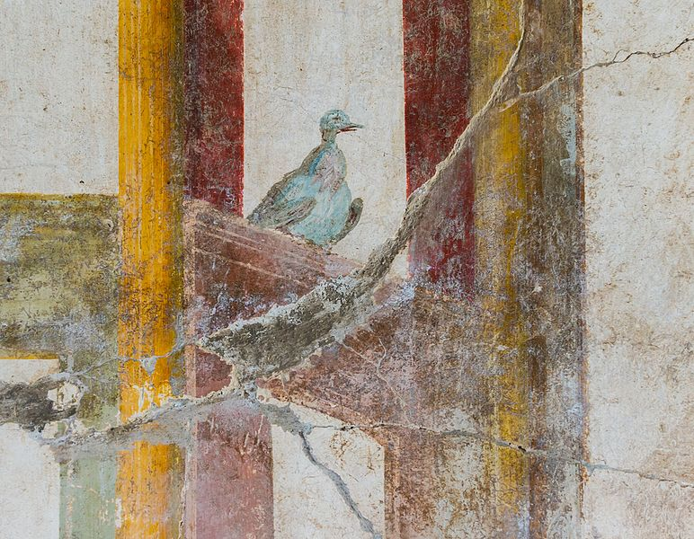 File:Fresco pigeon Oplontis.jpg