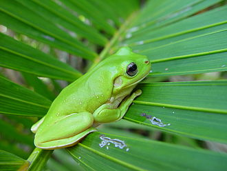 "Stock photography - A public domain stock photo titled ""frog on palm frond."""