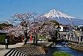 Fujinomiya Fuji-san Sakura 2.jpg