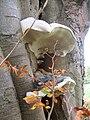 Fungi - geograph.org.uk - 581204.jpg