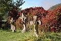 G5 Santa Maria, cementiri.jpg
