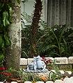 Garden Frogs (4564539282).jpg