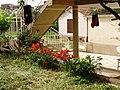 Garden lilies - panoramio.jpg
