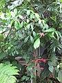 Gardenology-IMG 7914 hunt10aug.jpg