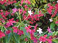 Gardenology.org-IMG 0319 rbgs10dec.jpg