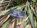 Gardenology.org-IMG 4770 hunt0904.jpg