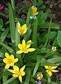 Gelbe Gartenblumen mit weißem Rand.JPG