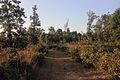 Gfp-wisconsin-buckhorn-state-park-hiking-path.jpg