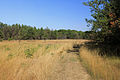 Gfp-wisconsin-mill-bluff-state-park-hiking-path-through-field.jpg