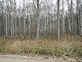 Gmina Bolimów, Poland - panoramio (17).jpg