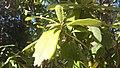 Godawari Botanical garden 14.jpg
