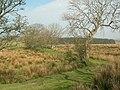 Grass Track - geograph.org.uk - 405844.jpg
