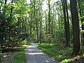 Graver Arboretum - 340.jpg