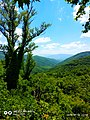 Greek nature5.jpg
