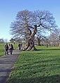 Greenwich Park - geograph.org.uk - 881080.jpg
