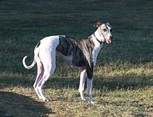 Image Result For Can I Breed