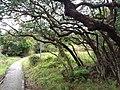 HK 西貢 Sai Kung District hiking Ma On Shan Country Park Pak Sha Wan Sam Sing Wan Pak Ma Tsui February 2021 SSG 60.jpg