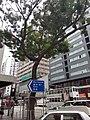 HK WC 灣仔 Wan Chai 駱克道 Lockhart Road 15pm September 2020 SS2 61.jpg
