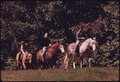 HORSE RIDERS IN THE BRECKSVILLE RESERVATION, A PART OF THE CLEVELAND, OHIO, METROPOLITAN PARK SYSTEM. IT IS SCHEDULED... - NARA - 557992.tif