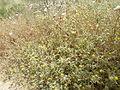 Hadassah Trail P1150457.JPG