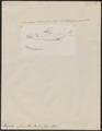 Harpodon nehereus - 1700-1880 - Print - Iconographia Zoologica - Special Collections University of Amsterdam - UBA01 IZ14700141.tif