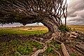Hawaii - Ka Lae - 20130327192457.jpg