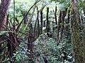 Helechos - panoramio - vozachudo2004.jpg