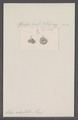 Helix adoptata - - Print - Iconographia Zoologica - Special Collections University of Amsterdam - UBAINV0274 089 01 0078.tif