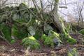 Herbstein Stockhausen Woellstein Outcrop Basalt a.png