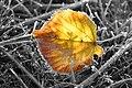 Herbstimpressionen (1).jpg