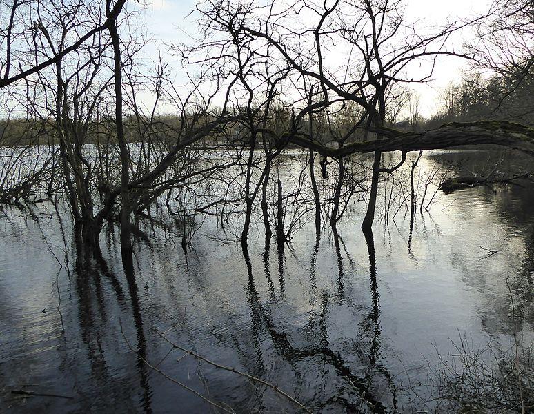 L'étang d'Amaury est un lac d'affaissement minier situé près des fosses Sophie, Laurent et Amaury de la Compagnie des mines d'Anzin dans le bassin minier du Nord-Pas-de-Calais, Hergnies et Vieux-Condé, Nord, Nord-Pas-de-Calais, France. L'étang d'Amaury est inscrit sur la liste du patrimoine mondial par l'Unesco le 30 juin 2012 et y constitue en partie le site no 5.