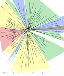 The graph of neighbor-joining phylogenetic tree shows that there is no clade-supporting pattern for the monophyly of Opisthobranchia (green) or of Pulmonata (yellow) based on datasets by Jorger et al. (2010). Heterobranchia tree.png