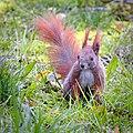Hidden in grass (31762241724).jpg