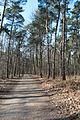 Hildener Heide 2016 179.jpg