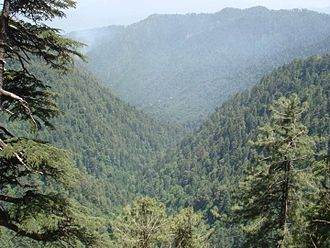 Omer Tarin - Hazara hills and forests near Abbottabad