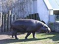 Hippo in Tallinn Zoo - panoramio.jpg