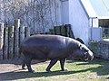 Hippo in Tallinn Zoo - panoramio.jpg