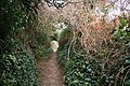 Holbeton, path from Meadowsfoot Beach - geograph.org.uk - 637225.jpg