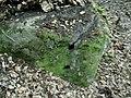 Holesinstone.jpg