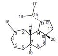 Homoverrucosano - Numeración.png