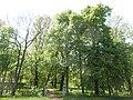 Hopfenbachtal.Lauterbach 021.jpg